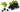 Svartvinbärsolja - kallpressad, ekologisk