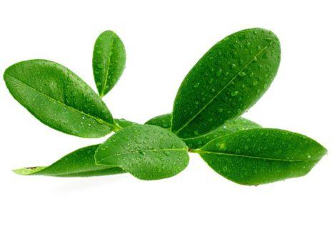 Ravensara - Ekologisk eterisk olja