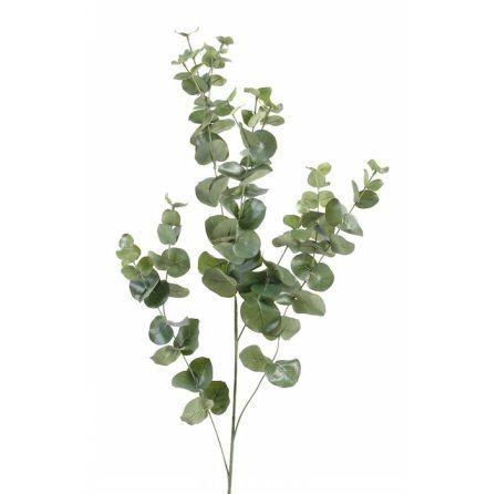 Eukalyptus - Eterisk olja
