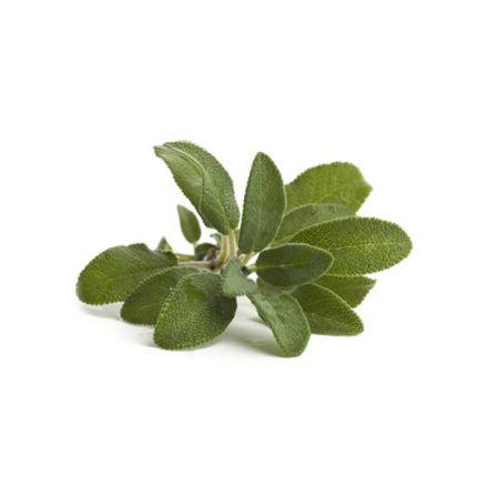 Salvia - Eterisk olja