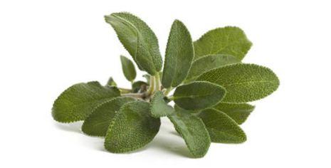 Salvia - Ekologisk Eterisk olja