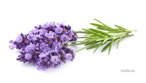 Lavendel - ekologisk eterisk olja